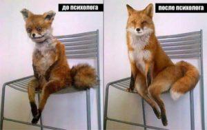 лиса до и после псхиолога